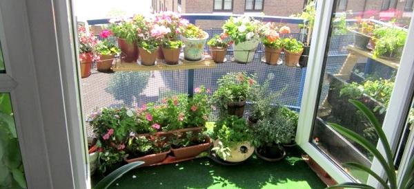 Planter un petit jardin sur son balcon starofservice - Petit jardin balcon ...